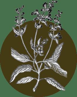 genotipo único de plantas Serpens